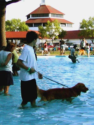Dog Gone Pool Party