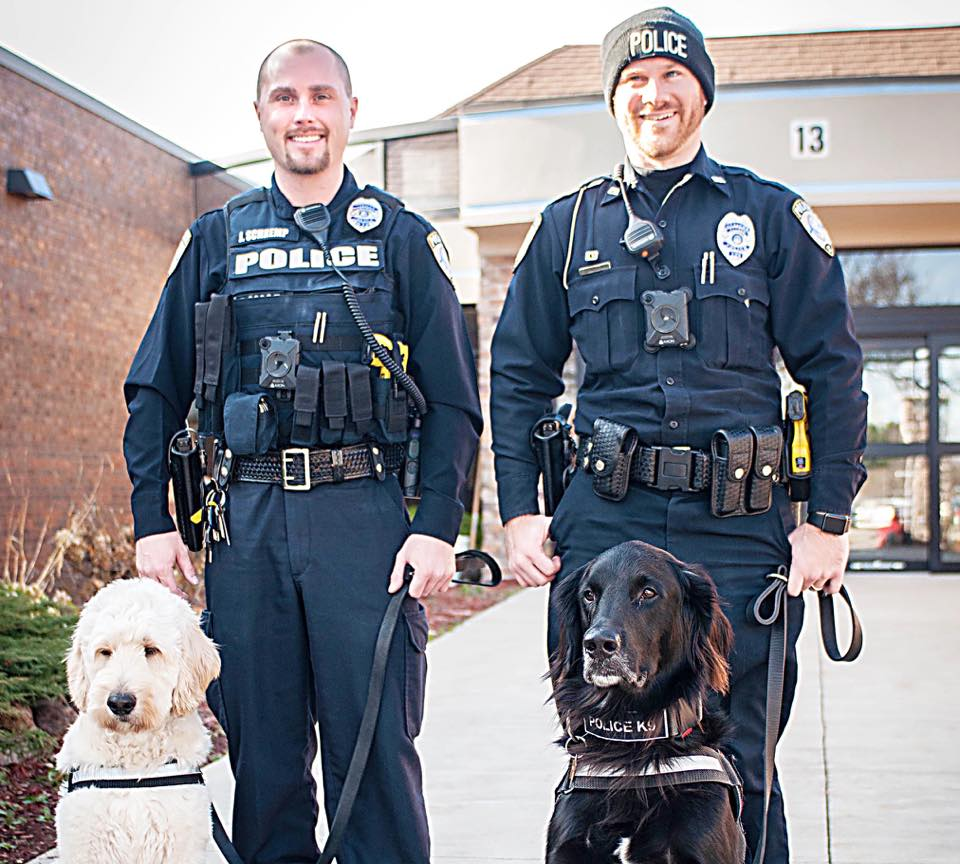 Therapy Dog Teams